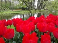 Visita-jardin-keukenhof-mayo-2015 (15).jpg