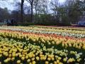 Visita-jardin-keukenhof-mayo-2015 (19).jpg