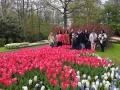 Visita-jardin-keukenhof-mayo-2015 (2).jpg